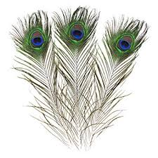 Real Natural Peacock Feathers 16-18 inches (40 ... - Amazon.com