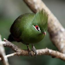 Image result for fabulous bird