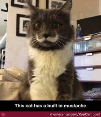 Fancy Cat Is Fancy by KoalCampbell - Meme Center via Relatably.com