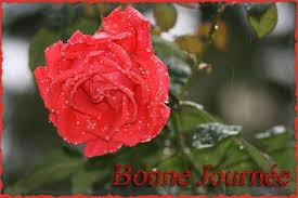 """Résultat de recherche d'images pour """"gifs bonne journée des roses"""""""