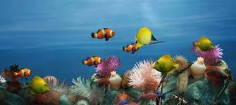 Image result for fish aquarium