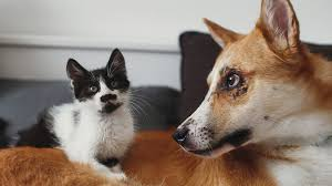 Most <b>FUNNY</b> and <b>CUTE Cats</b> and Dogs Playing Together ...
