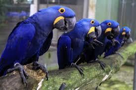curiosidades de los pájaros
