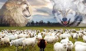 Kết quả hình ảnh cho Sói chăn cừu