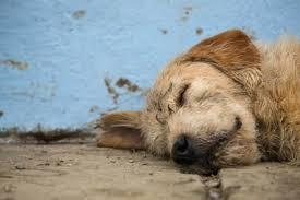 Αποτέλεσμα εικόνας για σκυλί Άρθουρ