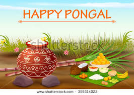 Image result for Pongal