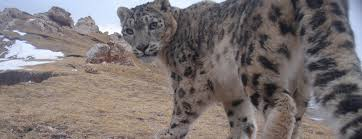 Snow <b>Leopard</b> Trust: Home