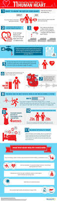 best images about the human heart heart disease the 11 interesting human heart facts in this infographic will help you to better appreciate this
