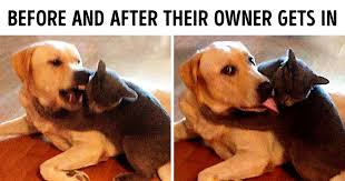 20 <b>Funny</b> Pics of Cats and <b>Dogs</b> Living Together