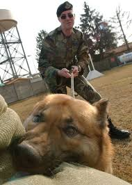 Loyal <b>four</b>-<b>legged</b> friends protect Aviano, deter crime > US <b>Air Force</b> ...