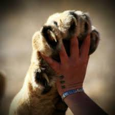 Image result for tiger paws