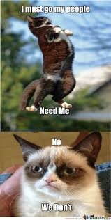 Grumpy Cat Memes. Best Collection of Funny Grumpy Cat Pictures via Relatably.com