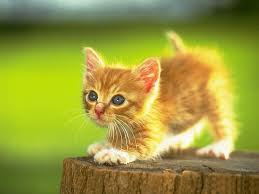 Image result for cute kitten pic