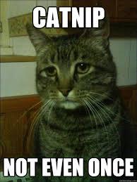 catnip not even once - Depressed cat - quickmeme via Relatably.com