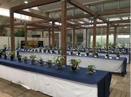 Rhapis flabelliformis, hemp palm bamboo exhibition | NAGAI PARK –