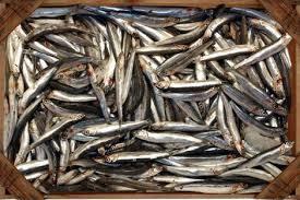 Resultado de imagen de imagen de pescados ricos en omega-3