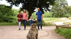 Trentham Monkey Forest   Day Out With The Kids