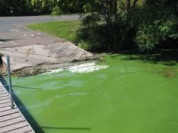 Lake Champlain phosphorus levels lead to Blue-Green Algae Bloom