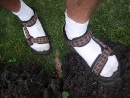 Image result for tevas
