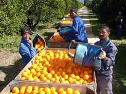 Europe considers dropping ban on South <b>African orange</b> juice ...