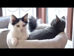 <b>Cute Cats</b> Waiting to Be Adopted at Ukraine's <b>Cat</b> Therapy Center ...