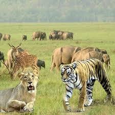 natural habitat of wild animals