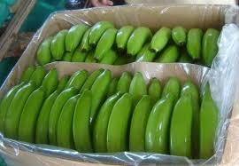 Resultado de imagen para cavendish bananan banner