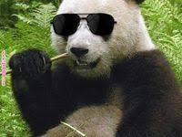10+ <b>Cool panda</b> ideas | panda, panda love, cute panda