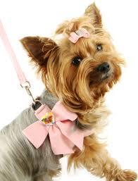 Πόσοι ιδιοκτήτες σκύλων γνωρίζουν για την τοξικότητα της σοκολάτας;
