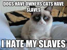 17 Most Funny Grumpy Cat Memes of All Time - Tons Of Cats via Relatably.com