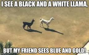 black and white llamas Meme Generator - Imgflip via Relatably.com