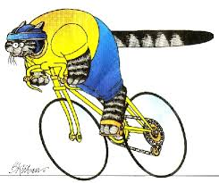 Image result for cat biking