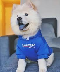 <b>Fashion</b> Letter <b>Pattern</b> Cat Blue Hooded Sweater <b>Dog</b> Drawstring ...