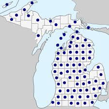 Potentilla recta - Michigan Flora
