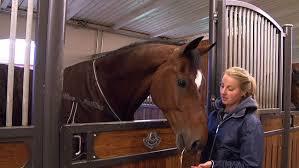 Norrköping satsar på hästtjejer | SVT Nyheter