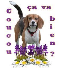 """Résultat de recherche d'images pour """"gifs des beagles"""""""