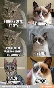 Grumpy Cat 10 Best Memes - top 10 best grumpy cat memes together ... via Relatably.com