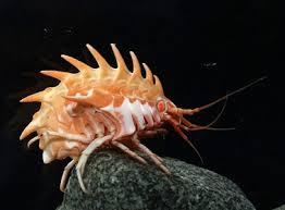 怪物,奇形,醜い,グロ,生き物,深海生物,水棲生物,ハプロフリュネーアンコウ,フサアンコウ,グソクムシ,深海鮫,深海魚,怪獣,ウルトラ,