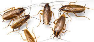 <b>Raid</b>® Как избавиться от <b>тараканов</b>?