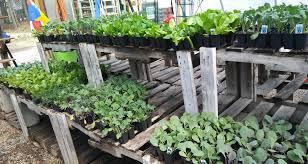 beaver valley farm pelham nh pet garden supplies slideshow veggies 4 17 jpg