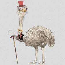 Set of <b>hipster birds</b>. Ostrich <b>Bird</b> in ... | Stock vector | Colourbox