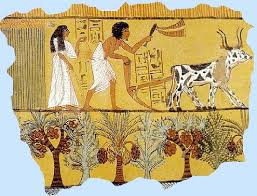 Farming in Ancient Egypt for kids Harvesting