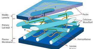 <b>Wood</b> pulp extract stronger than <b>carbon fiber</b> or Kevlar
