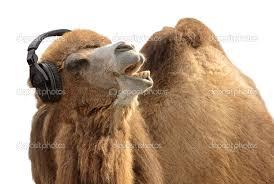 Resultado de imagen de camello y música