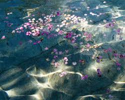 Resultado de imagen para flores y agua