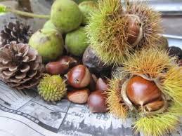 「縄文の食べ物」の画像検索結果