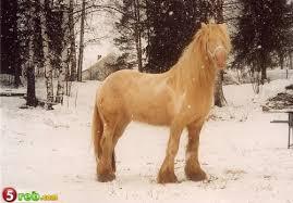صور اجمل احصنة في العالم images?q=tbn:ANd9GcT
