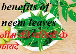 benefits of neem 234423682350 23252368 23462340238123402367235123792306 23252375 23472366235123422375 benefits of neem leaves in hindi 234423682350 23252375 23462340238123402375 23252375 232723692339