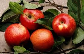 Αποτέλεσμα εικόνας για Συμβολισμός του μήλου