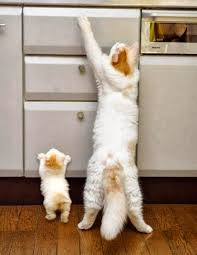 Image result for cats playing with computers and tablets